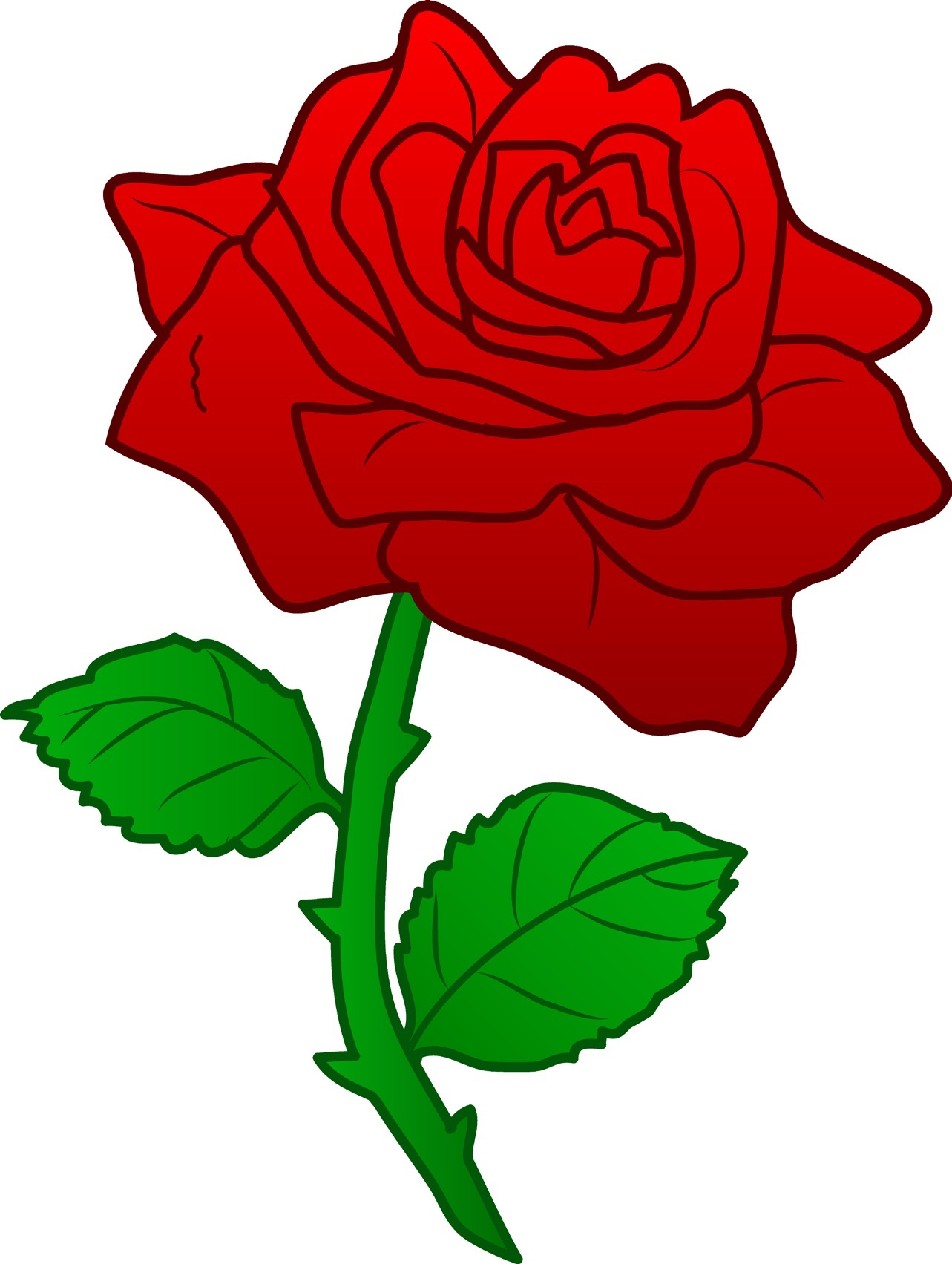 Red rose with thornsV